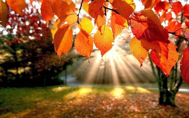 3 Tips for Fall HVAC Preparation in Levittown